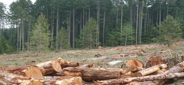 वन अफसरों की मिलीभगत से चार सालों से जारी था अवैध कटाई का कारोबार