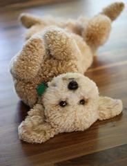 Cute-Dog-1 (3)