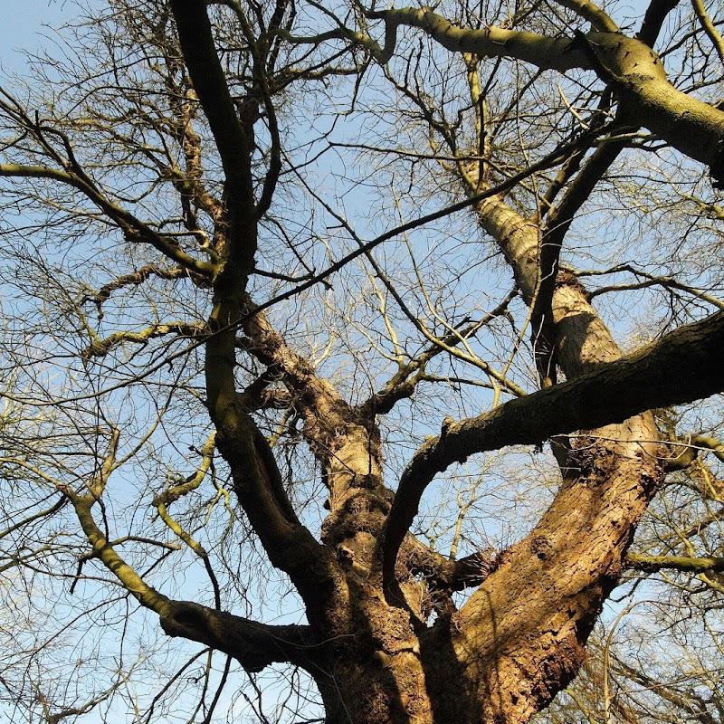 Stowe_Trees_18.JPG