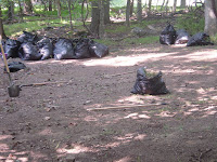 Debris from Clearing