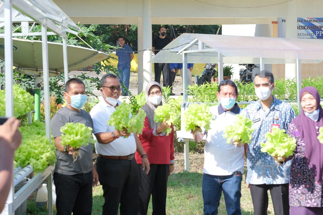 Gelar Panen Perdana Tanaman Hidroponik, Wabup Soppeng Dorong SKPD, Desa dan Lurah Dalam Ketersediaan Pangan
