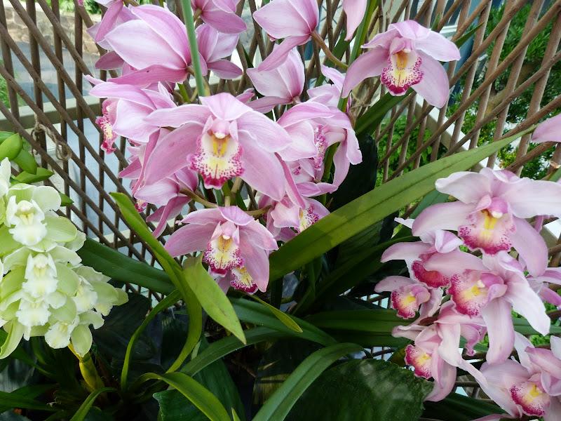 Taiwan où l'un des paradis des orchidées