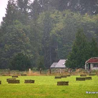 Damp%20Sequim%20Morning.jpg