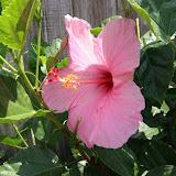 Gardening 2012 - IMG_3828.JPG