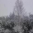 Зимняя уборка в Дендрарии 010.jpg