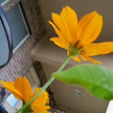 Gardening 2011 - 101_0028.JPG