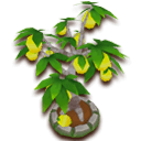 LemonTree.png.png