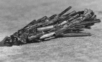 """Photo: """"Les mignons fagots, sans motif apparent, s'ébranlent et par soubresauts cheminent"""" J-H.FABRE  Chenille de papillon psychés habillée de morceaux de bois pour se protéger et se camoufler ! 15 mm. sur mur."""