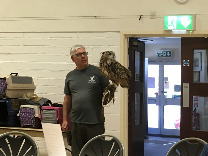 03 European Eagle Owl 1