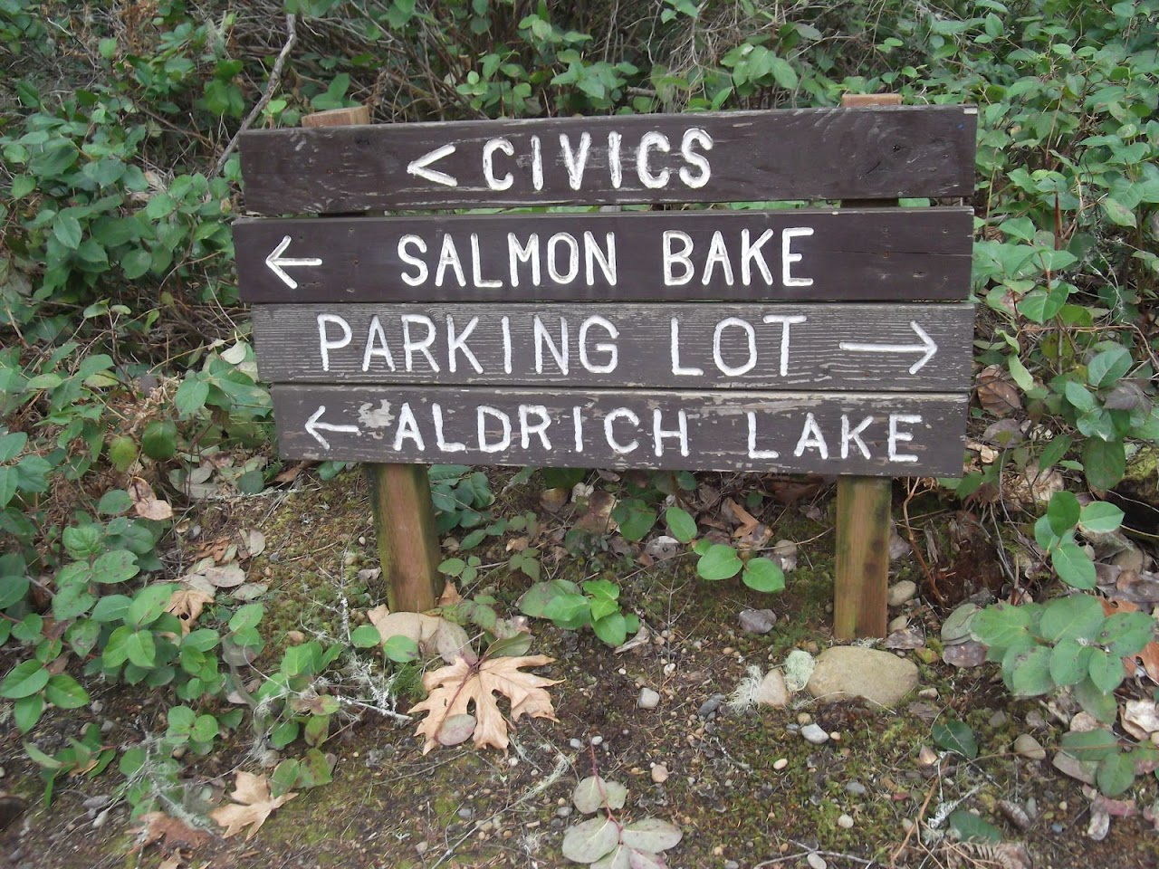 Too many choices......salmon does sound good.