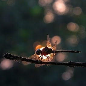 Silence of the woods by Amit Naskar - Animals Insects & Spiders