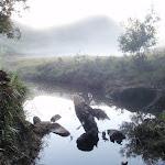 Creek crossing in farm (58655)