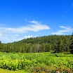 cannell_trail_IMG_1777.jpg