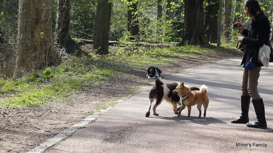 Balades canines en Nord (59)/Pas de Calais (62) - Boulogne-sur-Mer, Calais et Lille - Page 4 DSC01871