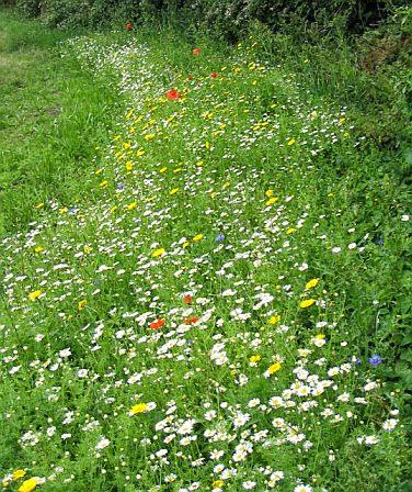 Grassfield Footpath - Hedge Planting - 4109928510233_0_ALB.jpg