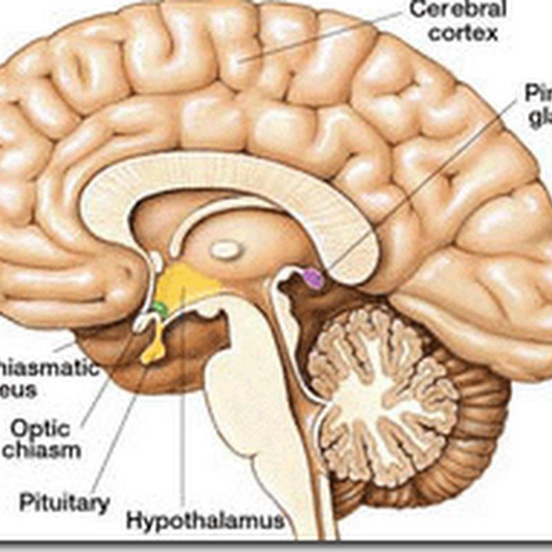 Desintoxicar la glándula pineal