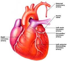 inflammatory heart disease condition