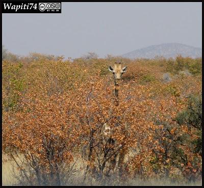 Balade australe... 11 jours en Namibie IMG_0439