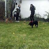 Mikosh i Sara u novom domu - 14936955_820393148063876_513732526_n.jpg