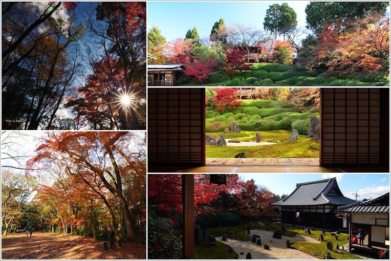 京都 行程 光明院 下鴨神社 楓