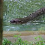 05-11-12 Wildlife Prairie State Park IL - IMGP1583.JPG