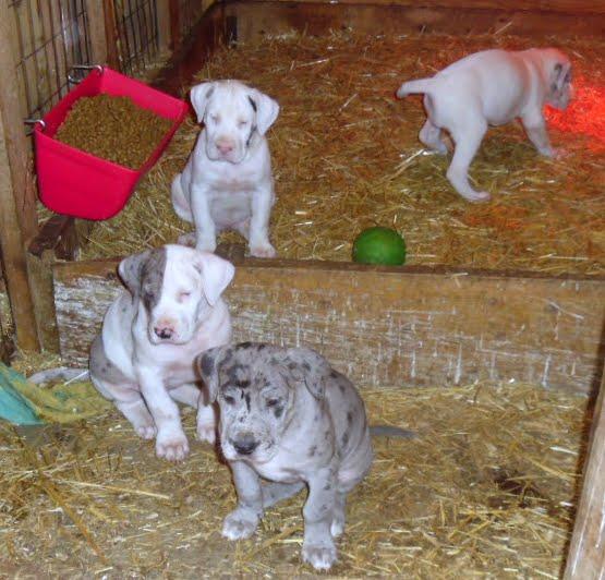 Cheyenne's babies @ 6 1/2 weeks