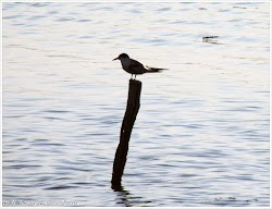 Птичий заповедник. Поморие. Болгария