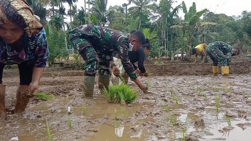 Kepala Desa Berikan Apresiasi,  Satgas Giat membantu Petani Tanam Padi di TMMD Kodim Tapsel