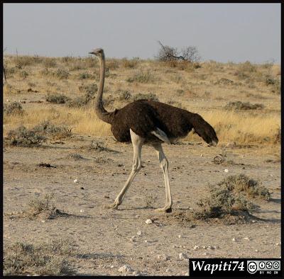 Balade australe... 11 jours en Namibie IMG_0334
