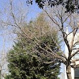 Sortida Sant Salvador de les espasses 2006 - CIMG8446.JPG