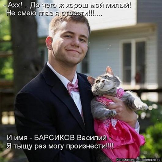 1495826274_kotomatricy-18