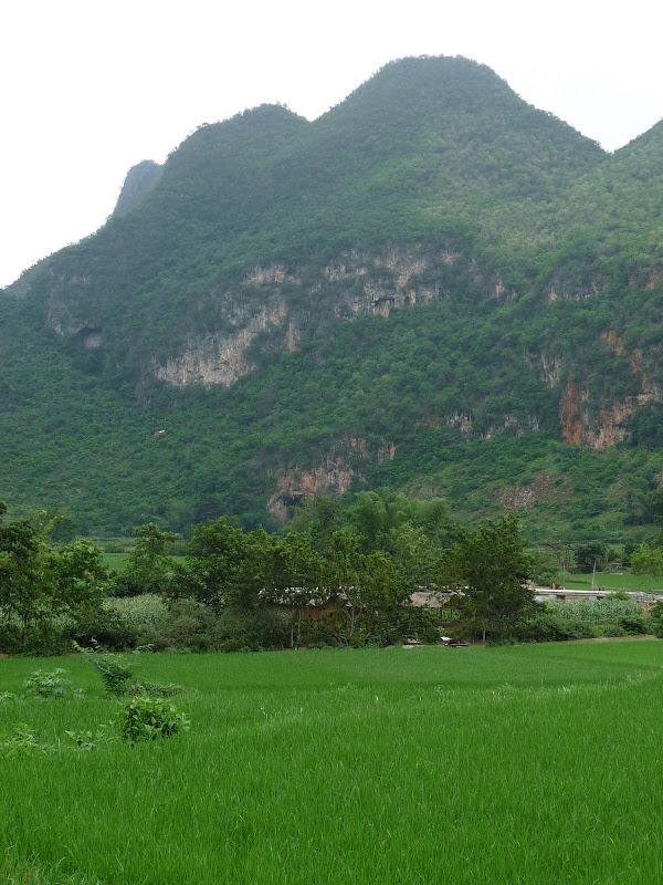 Chine . Yunnan BA MEI 2 - P1260962.JPG