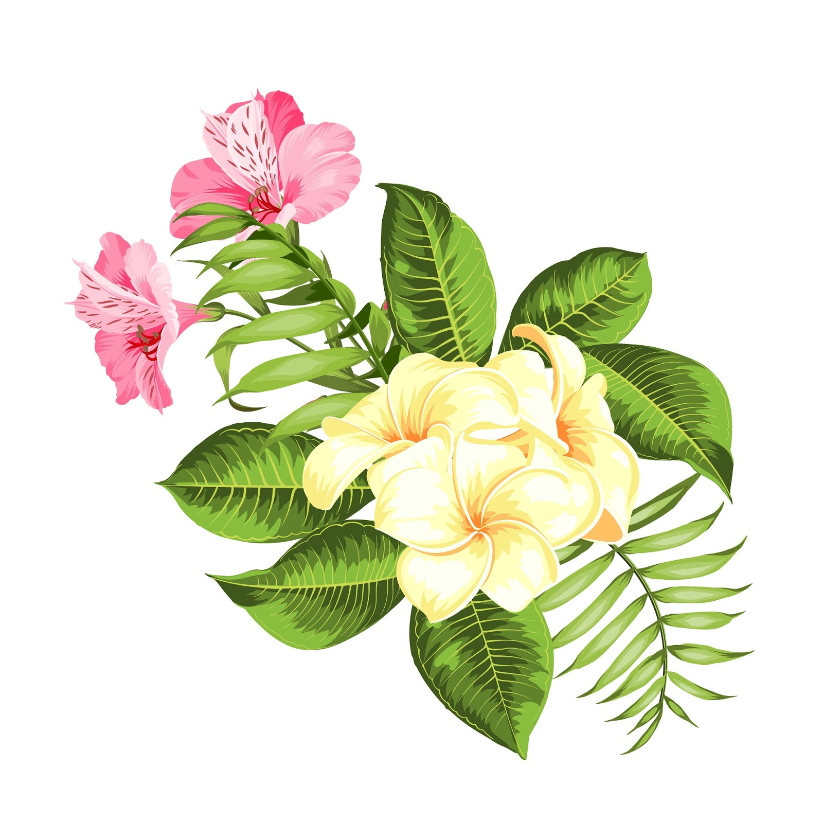 Tropical Flower White Background Free Download Vector CDR, AI, EPS and PNG Formats