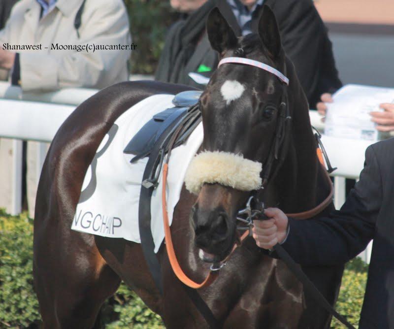 Photos Longchamp 6-04-2015  IMG_7791