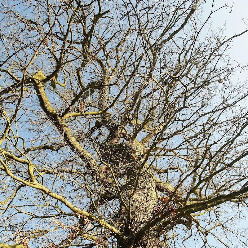 Stowe_Trees_16.JPG