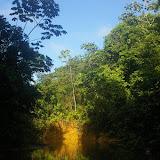 Crique Ipoussing, affluent de l'Approuague (Guyane). 20 novembre 2011. Photo : J.-M. Gayman