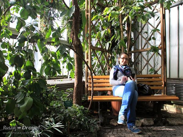 Kasia z gliwickiej palmiarni