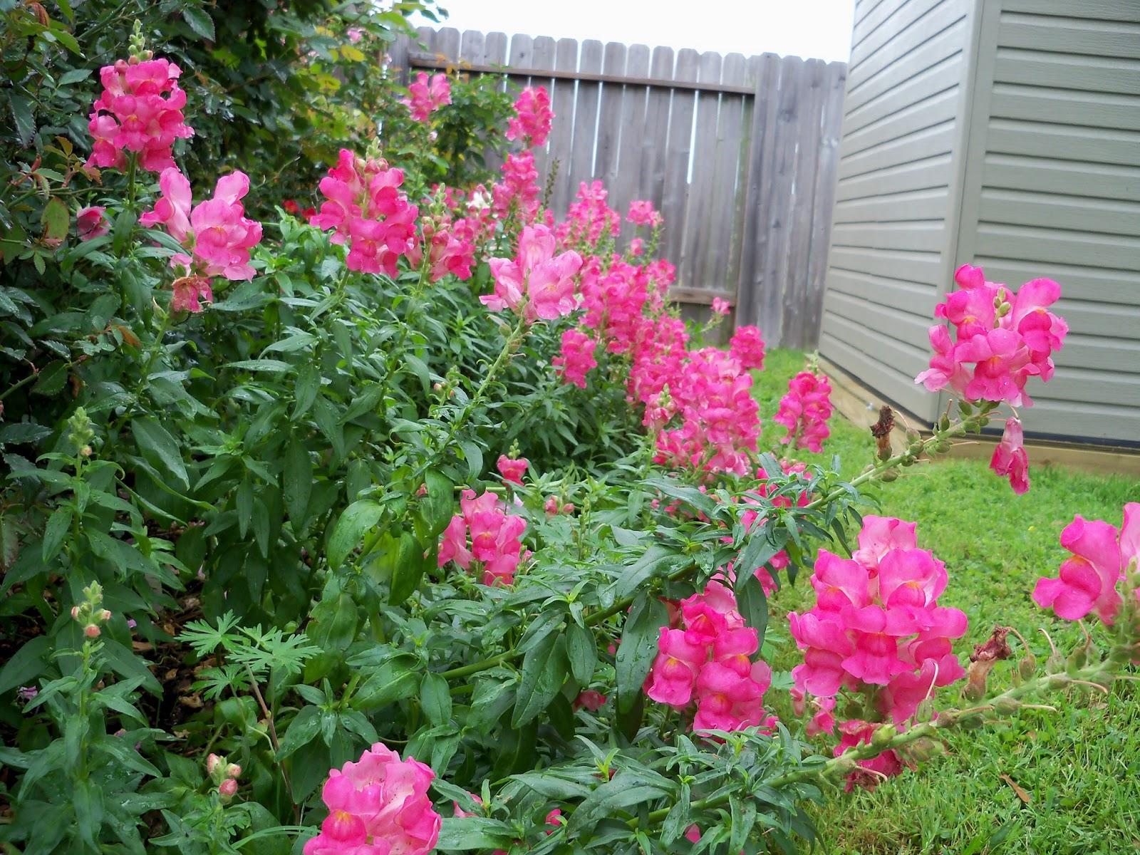 Gardening 2012 - 115_1346.JPG