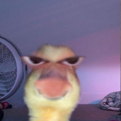 user Klarissa Hernandez apkdeer profile image