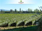 Todos los caminos conducen a Riccitelli Wines.