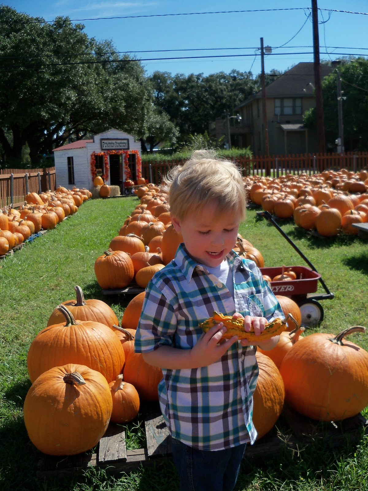 Pumpkin Patch 2015 - 100_0411.JPG