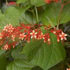 Las flores del Chocó