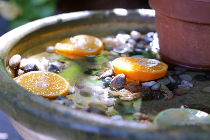 DIY Butterfly Garden Bath and Feeder
