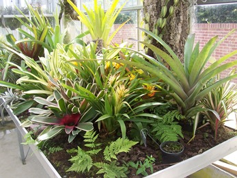 2010.08.13-009 orchidées et broméliacées