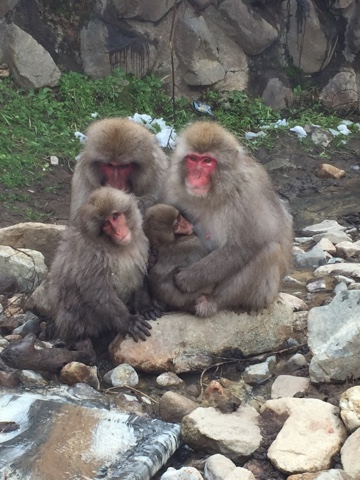 Some of the monkeys at the Snow Monkey Park Jigokudani Yaen-Koen in Nagano. This day trip is a must if you are visiting Japan in the winter.