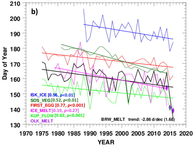 Snowmelt dates at Utqiaġvik (formerly Barrow) from 1975-2016 (bold black line) shown alongside several other environmental metrics that benchmark the onset of sprig in nearby areas: ice-out date in Isaktoak Lagoon (ISK_ICE); start of the vegetation growing season (SOS_VEG) south of BRW; date of first Black Guillemot egg on Cooper Island (FIRST_EGG); date of first liquid water in the snow or on the surface of the ice in the region north of Utqiaġvik (ICE_MELT); onset of flow greater than 10,000 cfs (cubic foot per second) in the Kuparuk River (KUP_FLOW); Oliktok Melt (OLK_Melt). Graphic: Cox, et al., 2017 / Bulletin of the American Meteorological Society
