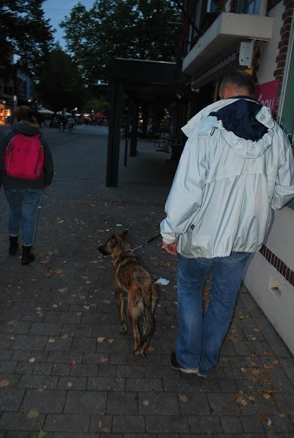 KNON-honden in Emmen - DSC_0809.JPG