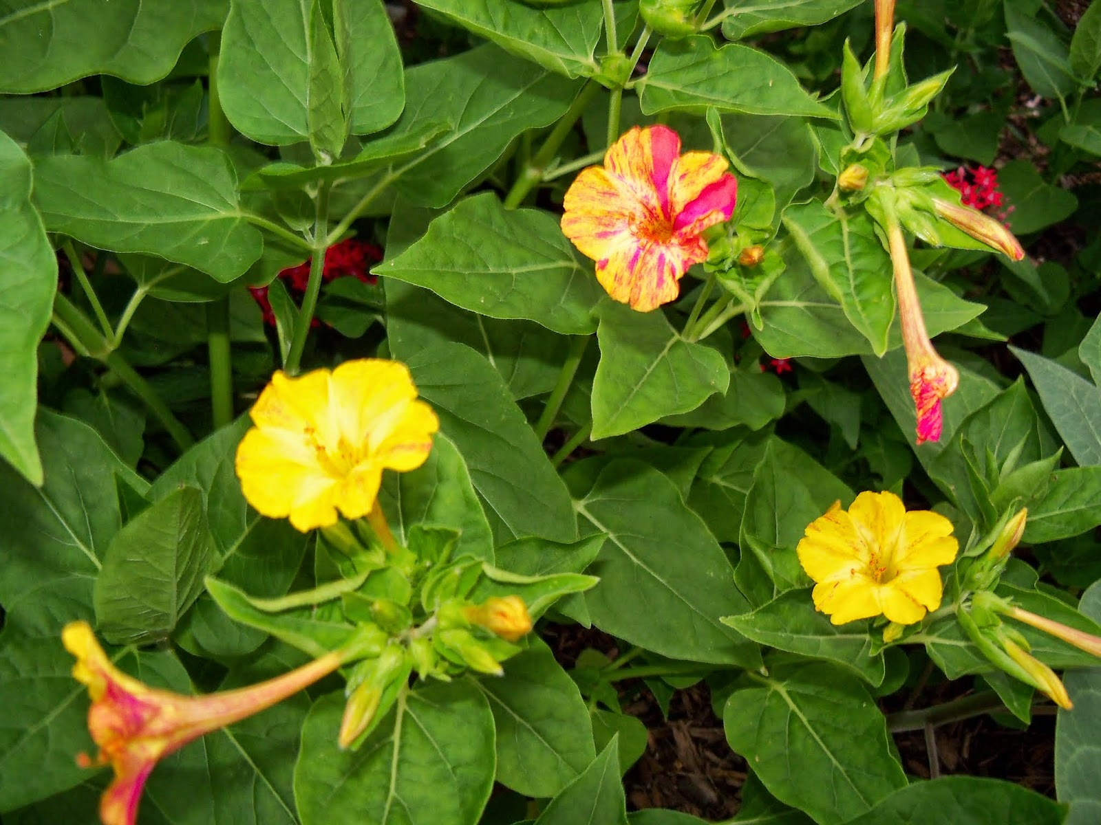 Gardening 2014 - 116_1956.JPG