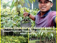 Budidaya Durian Bawor Yang Menguntungkan