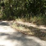Tracks near Green Point on Lake Macquarie (403129)